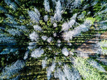 Aerial view of burned forest near Yosemite Stock Image