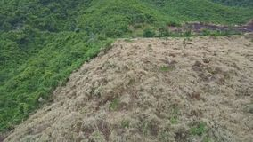 Aerial View Felled and Withered Plots among Green Forests. Aerial view burnt felled and withered plants plots prepared for rural usage among great green forests stock video