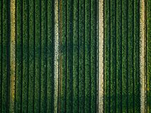 Aerial view of cabbage rows field in agricultural landscape royalty free stock photos