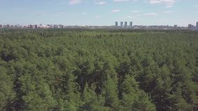 Aerial view camera from green forest of dense mixed tree tops of pine trees and birches. Clip. Aerial drone shot over. The north european forest stock video footage