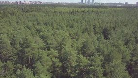 Aerial view camera from green forest of dense mixed tree tops of pine trees and birches. Clip. Aerial drone shot over. The north european forest stock footage