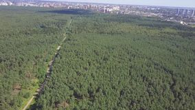 Aerial view camera from green forest of dense mixed tree tops of pine trees and birches. Clip. Aerial view flying over. Old patched two lane forest road with stock footage