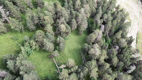 Aerial view camera moves from along green forest of dense mixed tree tops of pine trees and birches. Flying over a vast stock video footage