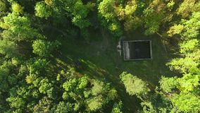 Aerial view camera moves rising up from green forest of dense mixed tree tops. Autum sunny day stock video