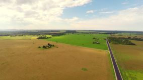 Aerial view of a canola field on a sunny day. Aerial footage. stock footage