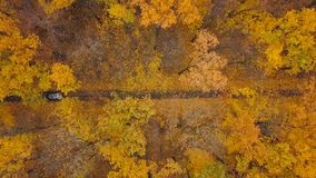 Aerial view on car driving through autumn forest road. Scenic autumn landscape. View from height on car driving through autumn forest road. Scenic autumn stock video footage