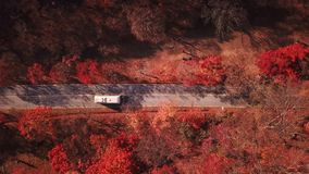 Aerial view Car Driving at country road in autumn forest. Naejangsan National Park,South Korea. Aerial view Car Driving at country road in autumn forest stock video footage