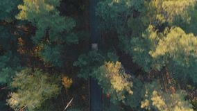 Aerial view of car rides in forest stock video footage