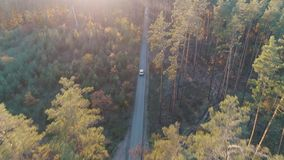 Aerial view of car rides in forest in sunlight stock video footage