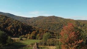 Harvesting hay on the hill. Carpathian mountains. Aerial view of the carpathian mountains in autumn. Small village. Beautiful orange hills and coniferous forest stock footage