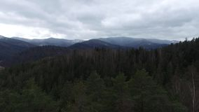 Aerial view on Carpathians and woods stock video