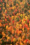 Aerial View of the changing fall colors of New England. The natural beauty of the autumn trees of Maine, New England, seen from the air Royalty Free Stock Photo