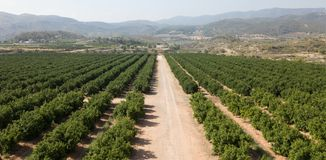 Aerial view of citrus groves royalty free stock photography