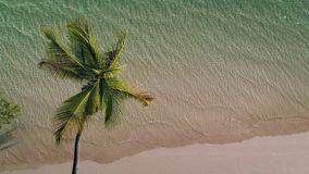 Aerial view of Coconut palm tree on tropical island beach and sea waves.  stock footage