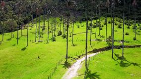 Aerial view of Cocora Valley and its wax palms forest Colombia. In a sunny day stock footage