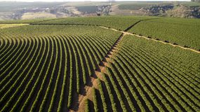 Aerial view coffee plantation in Minas Gerais state - Brazil.  Royalty Free Stock Images