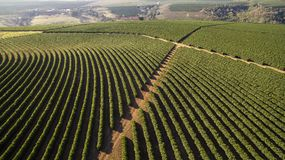 Aerial view coffee plantation in Minas Gerais state - Brazil.  stock images