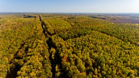Aerial view of the colorful autumn forest. Aerial view stock images