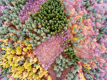 Aerial view of colorful autumn forest. Aerial view of colorful autumn forest with coniferous and deciduous trees Royalty Free Stock Photography