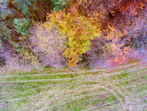 Aerial view of colorful autumn forest. Aerial view of colorful autumn forest with coniferous and deciduous trees Royalty Free Stock Photo