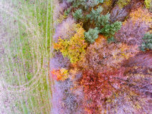 Aerial view of colorful autumn forest. Aerial view of colorful autumn forest with coniferous and deciduous trees Stock Photography