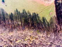 Aerial view of colorful autumn forest. Aerial view of colorful autumn forest with coniferous and deciduous trees Royalty Free Stock Photos