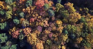 Aerial view of the colorful autumn forest. Look down on autumn forest. Looking down on amazingly beautiful autumn. Colorful trees. Flying over the beautiful stock video