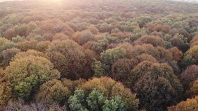 Aerial view of colorful autumn forest, oak woods, sunset stock footage