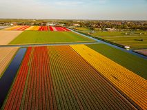 Aerial view of the colorful tflowers fields at spring in Lisse. Aerial view of the colorful Flowers fields at springtime in Lisse Netherlands royalty free stock photography