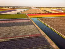 Aerial view of the colorful tflowers fields at spring in Lisse. Aerial view of the colorful Flowers fields at springtime in Lisse Netherlands stock photography