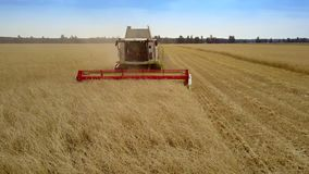 Aerial view combine gathers wheat harvest in wide field