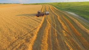 AERIAL VIEW. Combine on Harvest Field Loading. AERIAL VIEW. Combine unloads sloping wheat truck. The camera flies over them gradually moving away from stock video footage