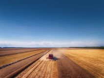 Aerial view of Combine harvester agriculture machine harvesting. Golden ripe wheat field Royalty Free Stock Photos