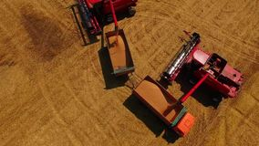 Aerial view Combine Harvester gathers the wheat at sunset. Harvesting grain field, crop season. Beautiful natural aerial