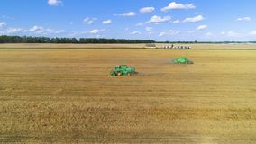 Aerial view of combine harvester on wheat field. Flying in a circle clockwise. stock video