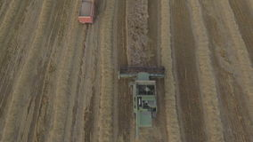 Aerial view combine harvesting a field of wheat. stock video
