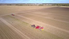 Aerial view combine harvests potatoes on large field stock footage