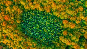 Aerial view of coniferous evergreen forest completely surrounded. Coniferous evergreen forest completely surrounded by deciduous forest in fall colors Stock Photo