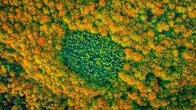 Aerial view of coniferous evergreen forest completely surrounded. Coniferous forest patch completely surrounded by deciduous forest in fall colors Stock Photo