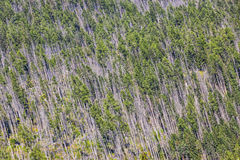 Aerial view of coniferous forest in High Tatras mountains Stock Image