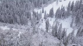 Flight over snowy mountain coniferous forest. Clear frosty weather stock footage