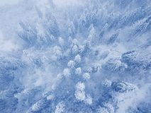Flight over snowstorm in a snowy mountain coniferous forest, unc Royalty Free Stock Images