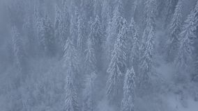 Flight over snowstorm in a snowy mountain coniferous forest, uncomfortable unfriendly winter weather. stock footage