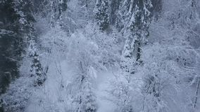 Flight over snowstorm in a snowy mountain coniferous forest, uncomfortable unfriendly winter weather. stock video footage