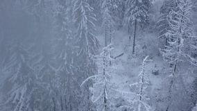 Flight over snowstorm in a snowy mountain coniferous forest, uncomfortable unfriendly winter weather. stock video