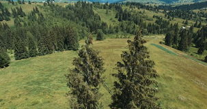 Aerial view of conifers stock footage