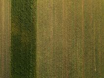 Aerial view of corn crops field. From drone pov, top view stock photos
