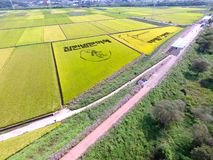 Aerial View of Cosmos Road and Rice Paddy Painting in Mujeom village, Changwon, Gyeongnam, South Korea, Asia.  stock image