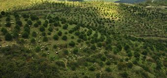 Aerial view of a country landscape in Turkey II stock images