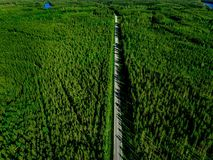 Aerial view of a country road with red car in the middle of green summer forest stock photos